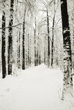 Road in winter park in snow Royalty Free Stock Photography