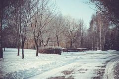 Road in the winter park Royalty Free Stock Images