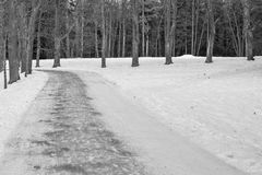 Road in the winter park or wood monochrome tone Stock Photography