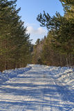Road in winter pine forest. Vertical frame Royalty Free Stock Images