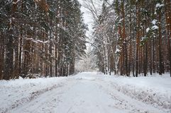 The road in the winter snow-covered forest. Winter landscape royalty free stock photography