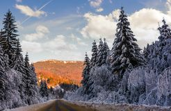 Road in winter spruce forest. Beautiful nature scenery in mountains at evening Royalty Free Stock Photo
