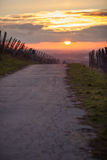 Road in winter sunset in vineyard Stock Photography
