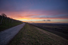Road in winter sunset in vineyard Royalty Free Stock Photos