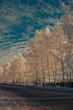 Road and winter trees Stock Photography