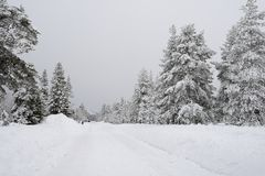 Road through a Winter Wonderland Stock Photos
