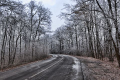 The road through the winter woods Stock Photo