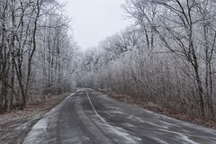 The road through the winter woods Stock Image