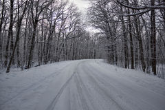 The road through the winter woods Royalty Free Stock Images