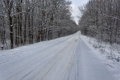 The road through the winter woods Royalty Free Stock Image