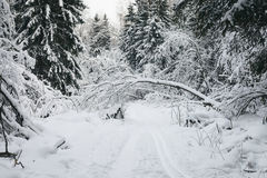 The road through the winter woods. Trail through winter forest, covered with snow Royalty Free Stock Photo