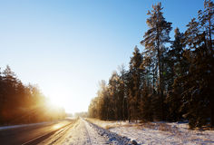 Road through wintry forest Royalty Free Stock Photos