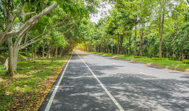 Road With Trees On Both Sides Royalty Free Stock Image