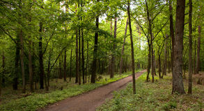 The road in the wood Royalty Free Stock Photo