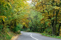Road in wood Royalty Free Stock Photography