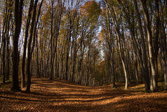 Road in wood. Road covered with leaves in wood Royalty Free Stock Images