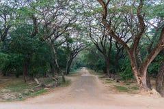 Road into the wood at angkor wat siem reap cambodia Royalty Free Stock Images