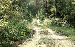 Road in a wood Royalty Free Stock Photography
