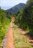 The road in the wood, Mauritius.Landscape in a sunny day Royalty Free Stock Photography