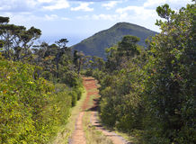 The road in the wood, Mauritius.Mountain landscape and sunny day. The road in the wood, Mauritius Stock Image