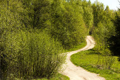 The road in the wood Royalty Free Stock Image