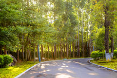 Road in wood Royalty Free Stock Image