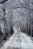 Road wood winter Stock Image
