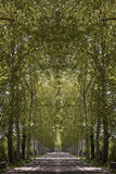 Road wooded Royalty Free Stock Images