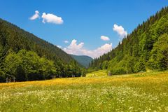 Road with a wooden fence in a field with yellow flowers. The nice view to the landscape of high mountains in the sunny day. Road with a wooden fence in a field royalty free stock images