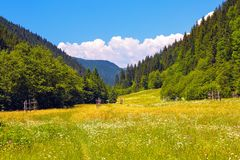 Road with a wooden fence in a field with yellow flowers. The nice view to the landscape of high mountains in the sunny day. Road with a wooden fence in a field stock photo