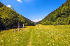 Road with a wooden fence in a field with yellow flowers. The nice view to the landscape of mountains in the sunny day. Road with a wooden fence in a field with stock photography