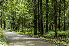 Road in woodland Stock Image