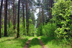 Road in the woods Royalty Free Stock Photos