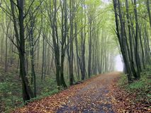 The road in the woods. Among the trees with fallen leaves in autumn Stock Photo