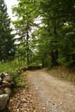 Road in the woods Royalty Free Stock Photography