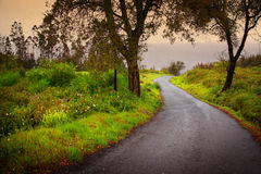 Road on Woods stock image