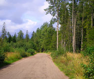 Road in the woods. A road  in the woods Stock Photos
