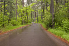 Road Through Woods Royalty Free Stock Images
