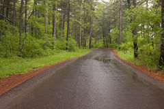Road Through Woods. A paved road traveling through the woods on a rainy day Stock Photos