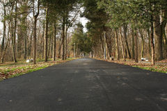 Road through the woods. Asphalt road through the woods Royalty Free Stock Image