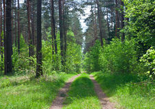 Road in the woods Stock Photos
