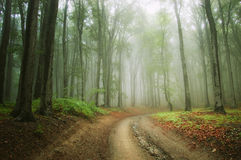 Road in the woods. With fog Stock Photo