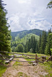 The road in the woods. The road in the forest on the background of mountains and clouds Stock Image
