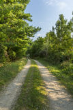 Road In Woods Royalty Free Stock Photography
