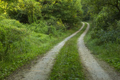 Road In Woods Royalty Free Stock Image