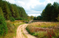 Road in the Woods. Rural road passing through the forest. Russia Royalty Free Stock Photography