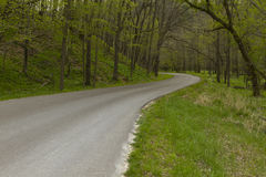 Road In Woods Spring Royalty Free Stock Image