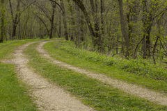 Road In Woods Spring Stock Photography