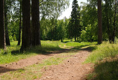 Road in the woods. Summer road in coniferous forest, summer day Royalty Free Stock Image