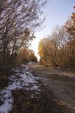 Road in the woods in sunset royalty free stock photography